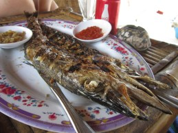 Gili Air - Barracuda! YUM!